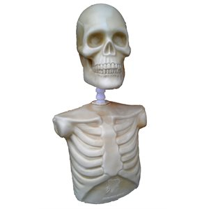 Buste Squelette